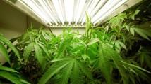 gty_marijuana_plants_jt_120122_wblog
